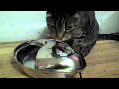Pioneer Stainless Steel Raindrop Pet Fountain Youtube
