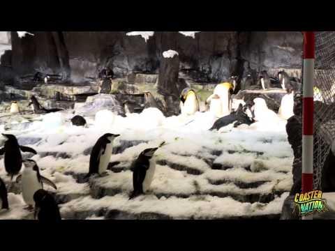 Antarctica Empire of the Penguins Exhibit - SeaWorld Orlando