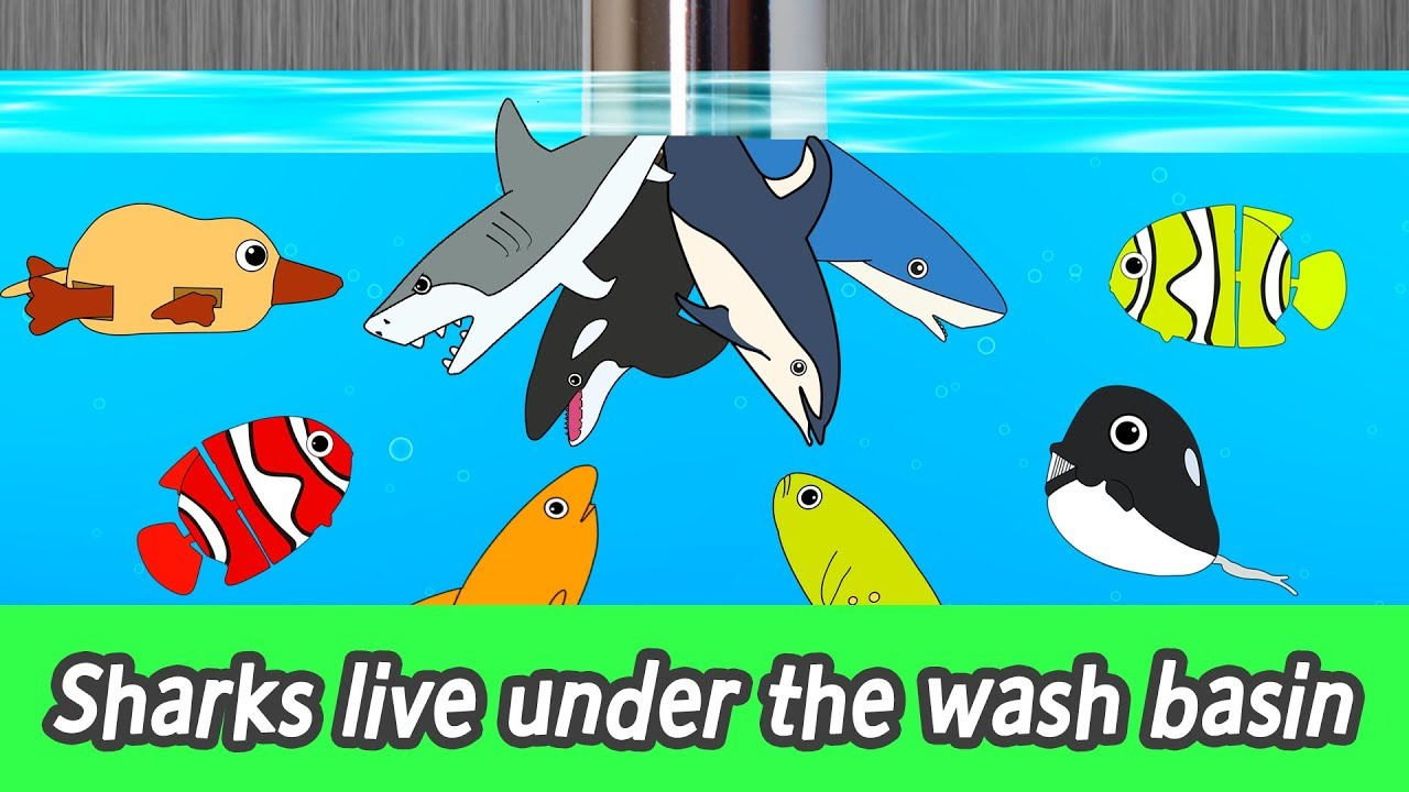 Download [EN] Sharks live under the wash basin! kids animals animation, sharks adventureㅣCoCosToy