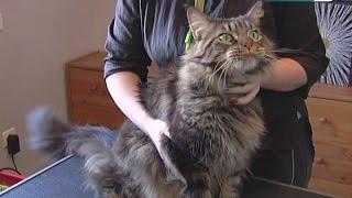 Жительница Королёва открыла у себя дома салон красоты для животных