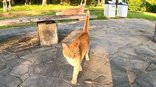 ベンチに野良猫がいたので近づくと猫はモフられに出てきた