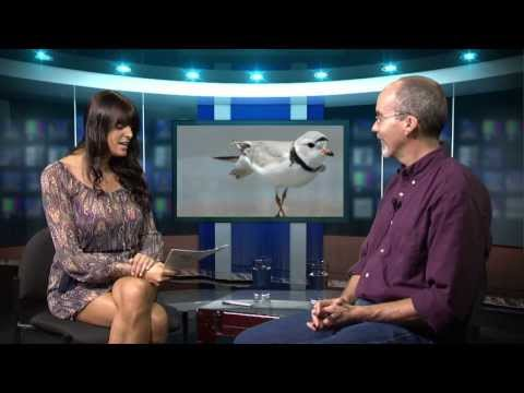 SHOREBIRDS: The World's Greatest Migrants,  EPISODE 4