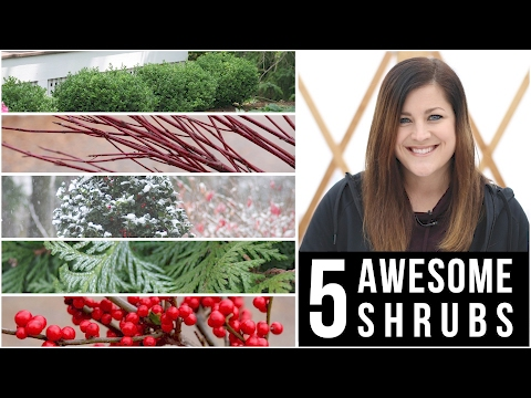 5 Awesome Shrubs for Winter Interest // Garden Answer