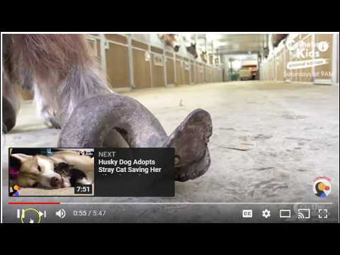 Poor Pony Hooves Over Grown - This Rescue Does Great Work - Good Job