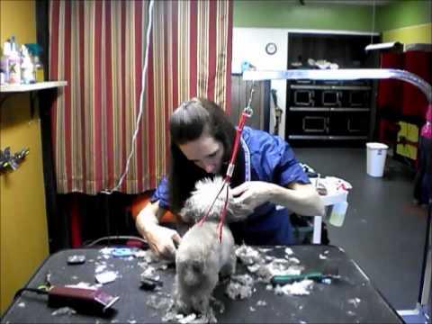 Kims Dog Grooming