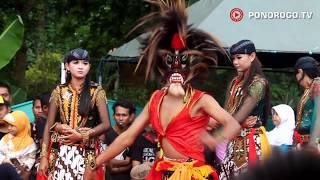 Reog Ponorogo Di Desa Gontor, Bujang Ganong Cilik Minta Edrek Jathil Cantik, Seru & Lucu