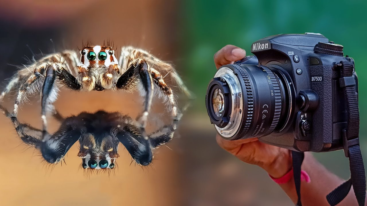 How to use Any Lens for Macro Photography | 18-55mm Reverse Lens Macro Photography