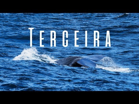 Visiting Terceira, Azores - Blue Whales and Landscapes