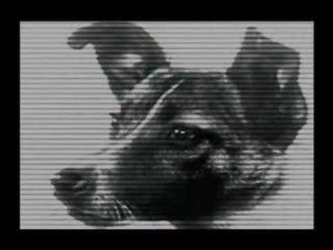 Laika - Space Dog