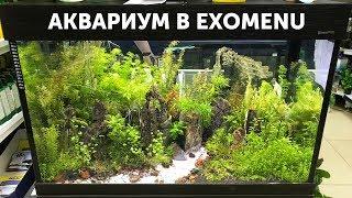 Аквариум в супермаркете EXOMENU в Санкт-Петербурге