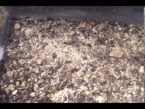 Cleaner Crews Work to Clean Roach Colony