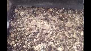 Cleaner Crews Work to Clean Roach Colony & Bioactive Tanks