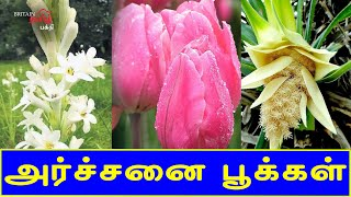 அர்ச்சனை பூக்கள் | Flowers for Poojai | Archchanai Pookal | Britain Tamil Bhakthi