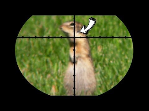 Ground Squirrel Pest Control - Poison vs Pellets [contains hunting]