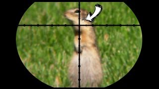 Ground Squirrel Pest Control - Poison vs Pellets [contains hunting] thumbnail