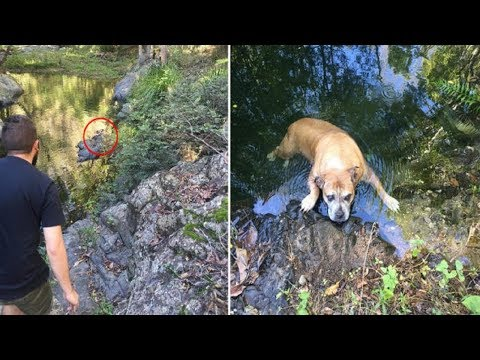 Family Stumble Across A Lost Dog In The Australian Bush  What They Do Next Is INCREDIBLE!