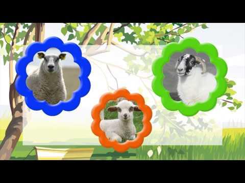 Домашние животные и их дети. Музыкальный развивающий мультфильм. Наше_всё!
