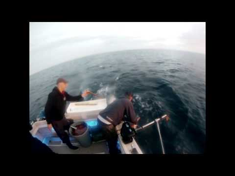 Tuna Fishing Vancouver Island Offshore Kyuquot Sound