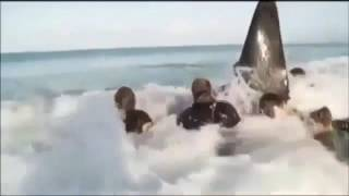 Stranded Orca Saved By Group Of Heroes
