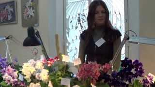Коллекция цветов стрептокарпусов в Киеве: Юлия Склярова Представляет Коллекцию