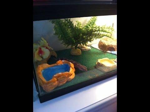 amenagement terrarium gecko
