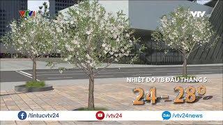 Vì sao hoa sữa Hà Nội nở trái mùa? | VTV24