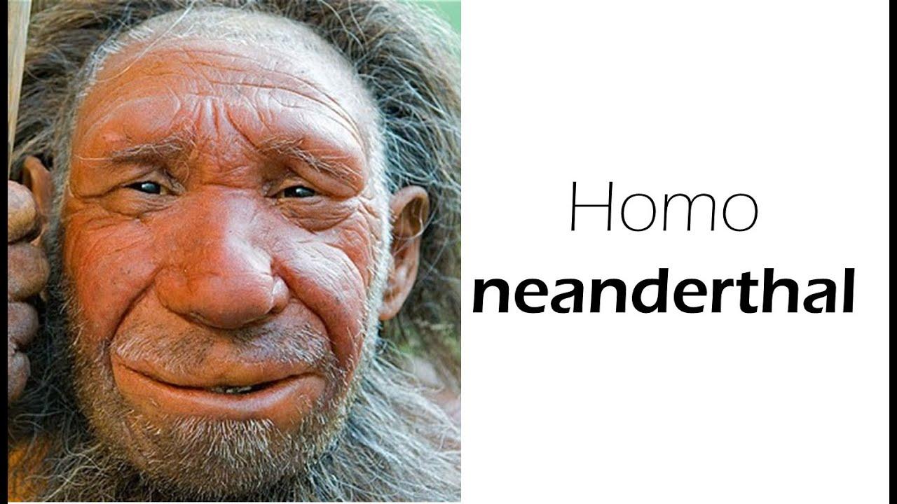Homo Sapiens Neandertaler