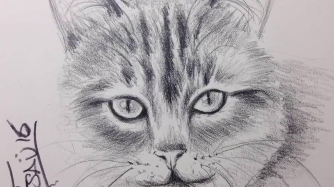 Gato A Lapiz Dibujos De Gatos Youtube