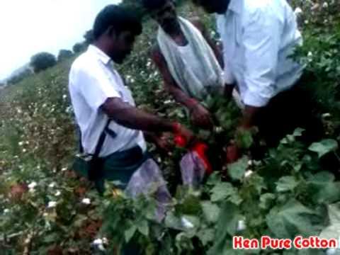 Kenpure Cotton Picking Machine Youtube