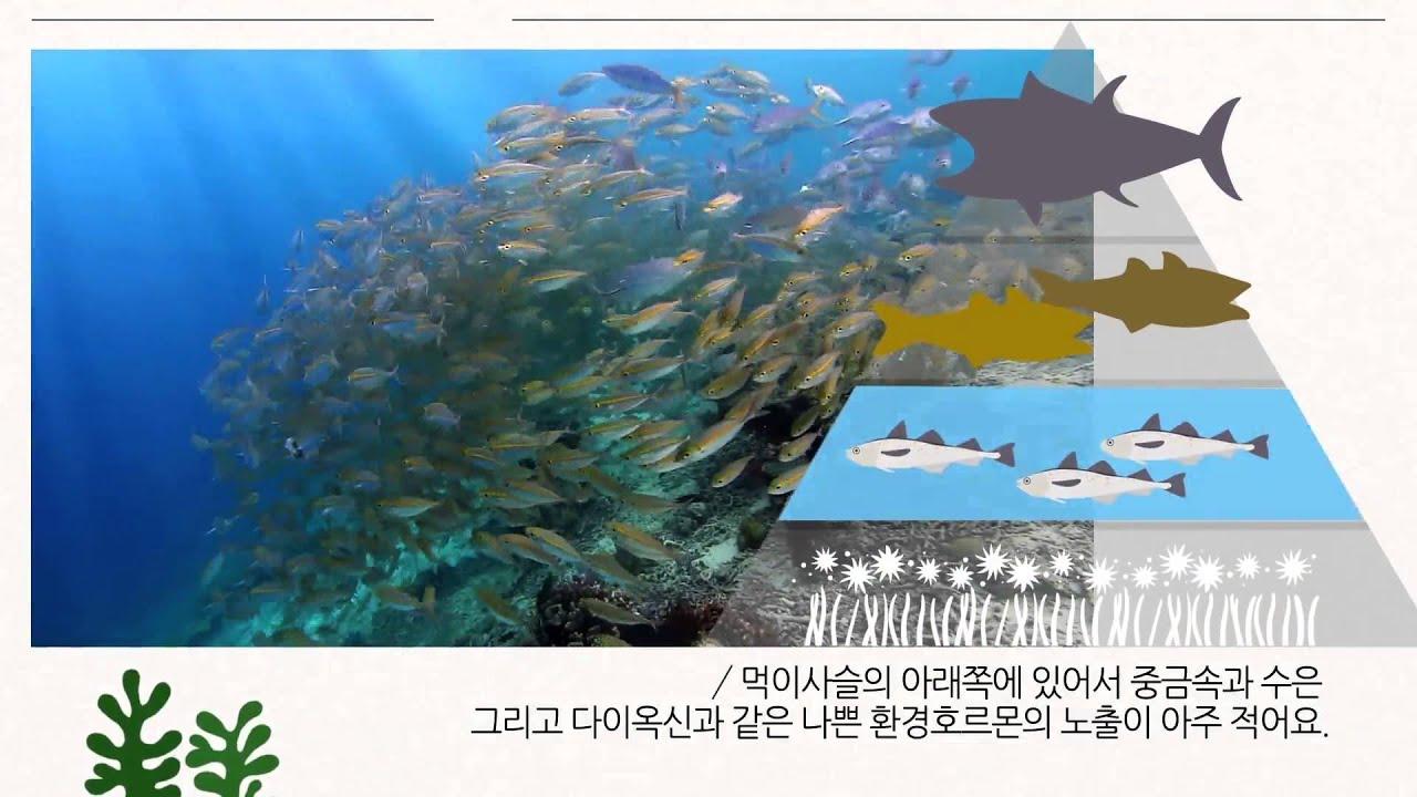 K Max Alaska Deep Sea Fish Oil Omega 3 6 9 Minyak Ikan Spec Dan Kmax Grosir 6pcs Y Take Both