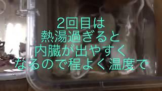 アメブロURL https://ameblo.jp/yuyu1945/ この動画は餌用冷凍ネズミと...