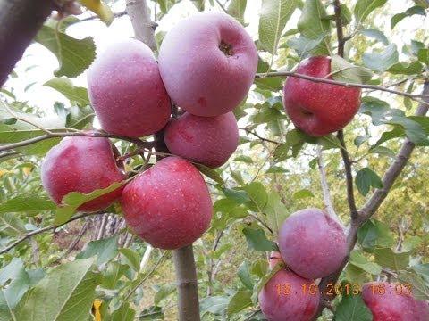 La cules de mere Florina