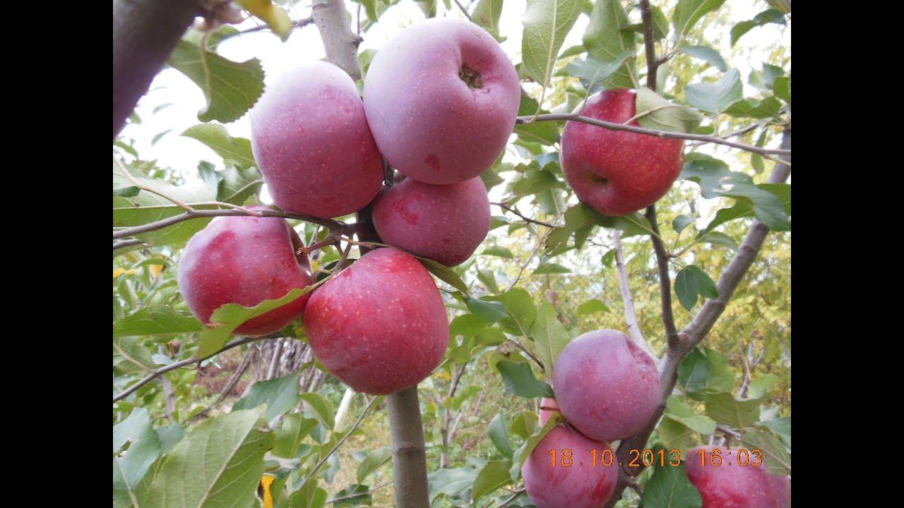 Papiloame pe gat tratamen popular otet de mere