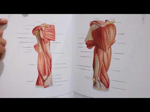 unboxing:-sobotta,-atlas-de-anatomía.