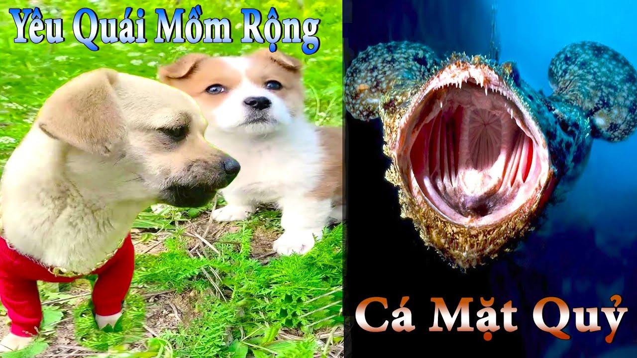 Thú Cưng TV | Dương KC Pets | Bông ham ăn Bí Ngô Cute #46 | chó vui nhộn | funny cute smart dog pets