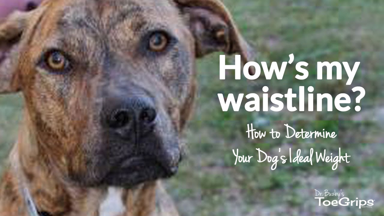 How to Determine Your Dog's Body Condition Score