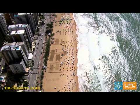 Send flowers Recife. Flower delivery worldwide
