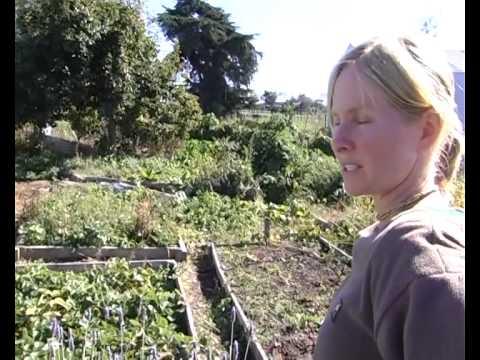 Organic Market - Sustainable People, New Zealand