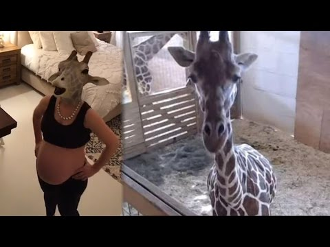 Thumbnail: Pregnant Woman DANCES Around In a GIRAFFE MASK | What's Trending Now!