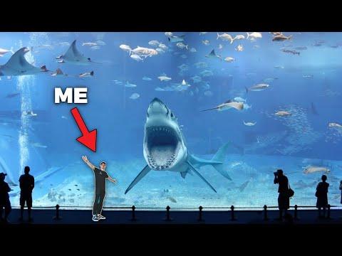 SEA Aquarium - 2nd Largest Aquarium in The World!! - (Private Tour)