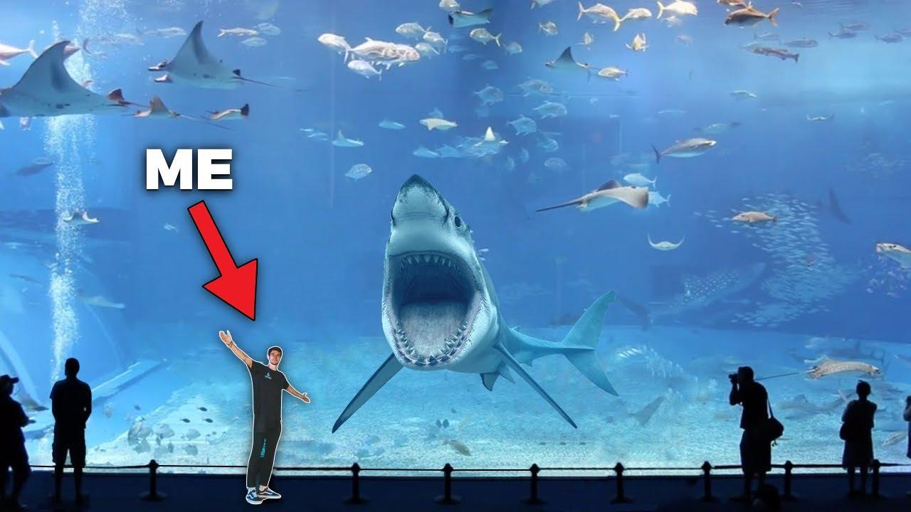 SEA Aquarium - 2nd Largest Aquarium in The World ...