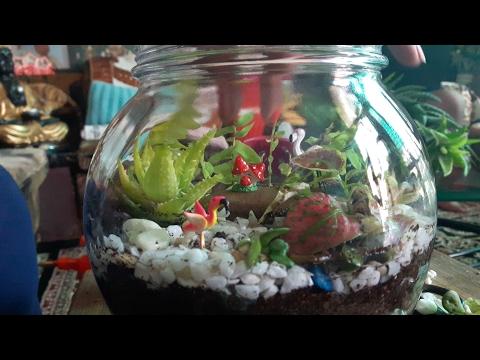 How to make Terrarium ? || Terrarium in a pot || Fun Gardening || 27 May, 2017