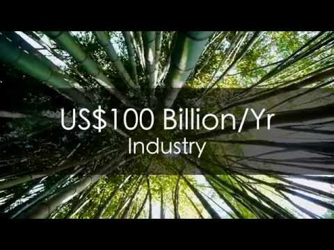 Expanding the Bamboo Industry with Africa Plantation Capital