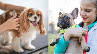 Top 10 Well Behaved Small Dog Breeds