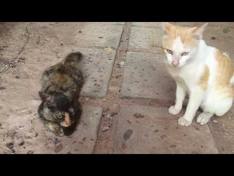 The two cats play off each other and are very affectionate.