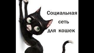 Кошки на Форуме. Аккаунт взломан ! Хохма ! Cats at the Forum. Funny !