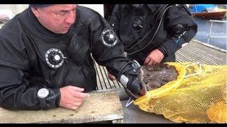 Нападение рыбы Морской Черт на дайвера!!! The attack fish monkfish on a diver!!!