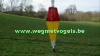 Scarecrow www.wegmetvogels.be