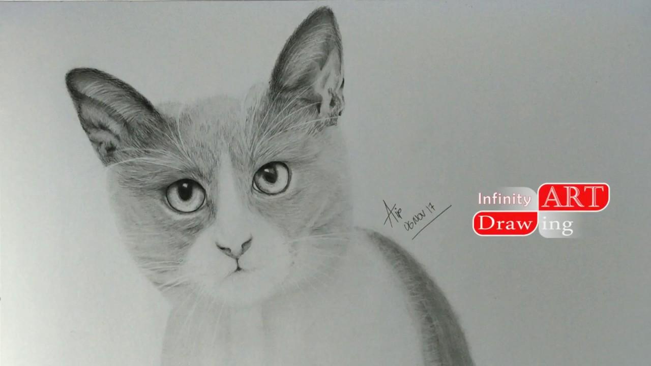 Gambar Kucing Sketsa Pensil