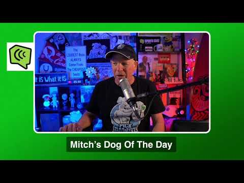 Mitch's Dog of the Day 11/27/20: Free College Basketball Pick CBB Picks, Predictions and Betting Tip